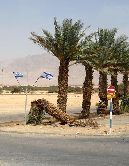 Смерть пальмы