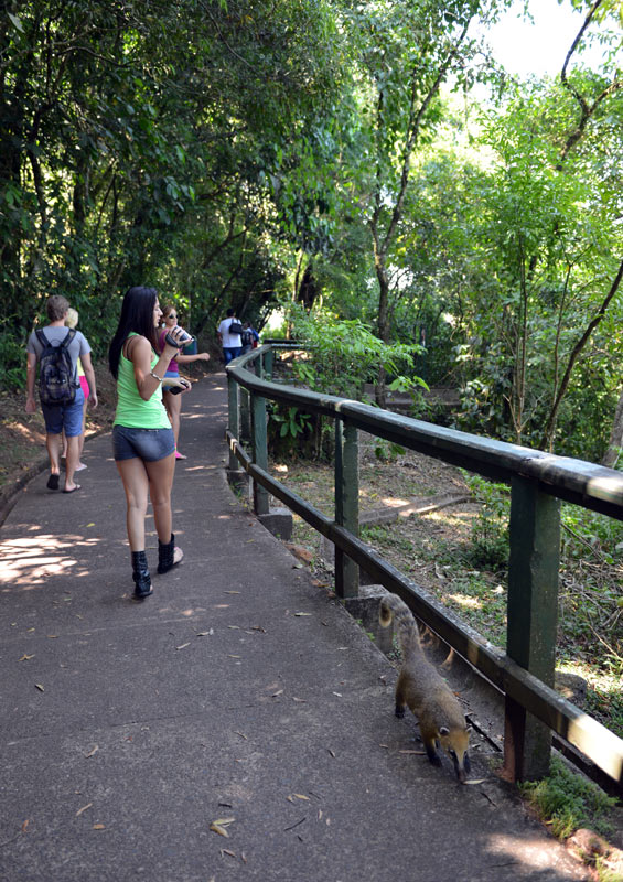 Водопады Игуасу. Бразилия. Brasil. Iguacu Waterfalls. 14