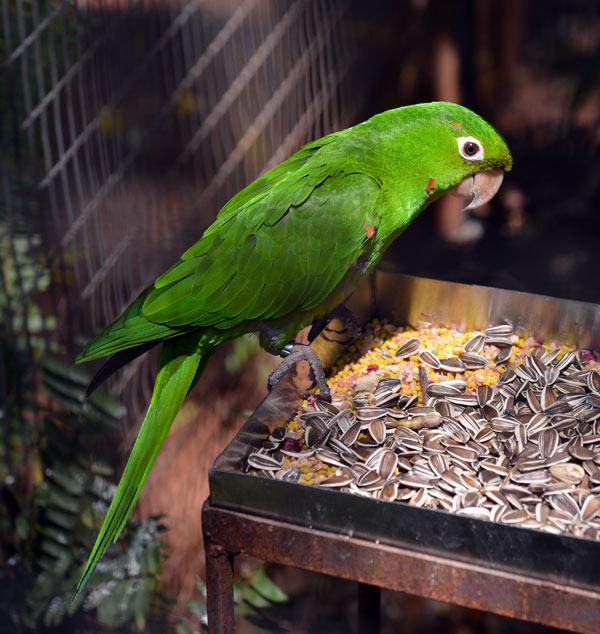 Парк Птиц. Игуасу. Бразилия. Bird Park. Iguacu. Brasil. 3
