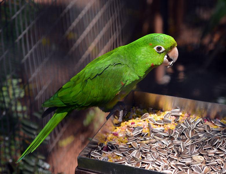 Парк Птиц. Игуасу. Бразилия. Bird Park. Iguacu. Brasil. 5