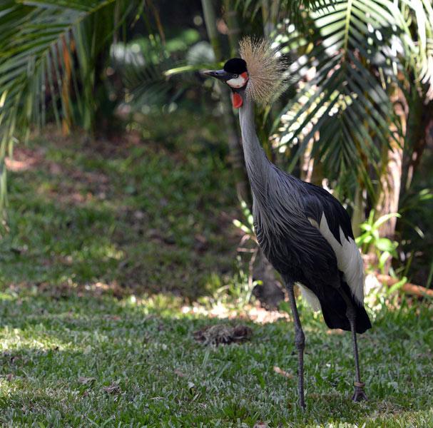 Парк Птиц. Игуасу. Бразилия. Bird Park. Iguacu. Brasil. 8