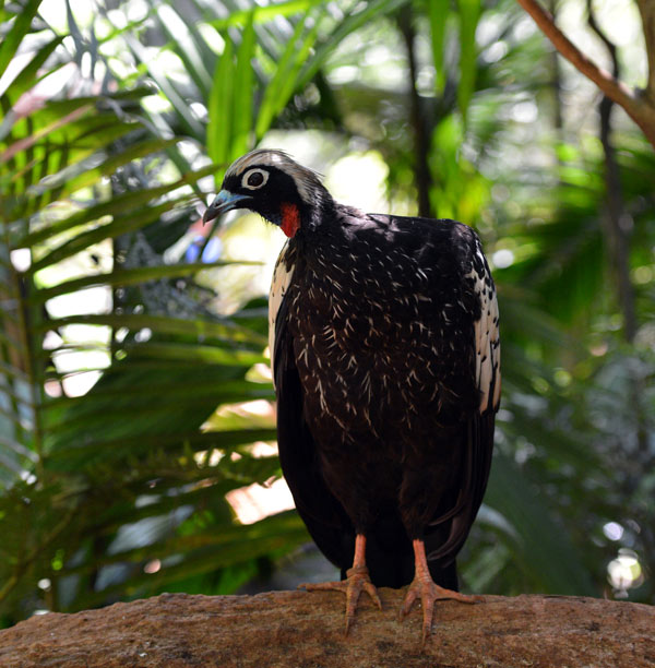 Парк Птиц. Игуасу. Бразилия. Bird Park. Iguacu. Brasil. 9