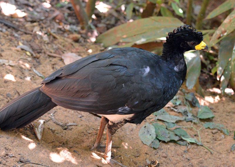 Парк Птиц. Игуасу. Бразилия. Bird Park. Iguacu. Brasil. 13