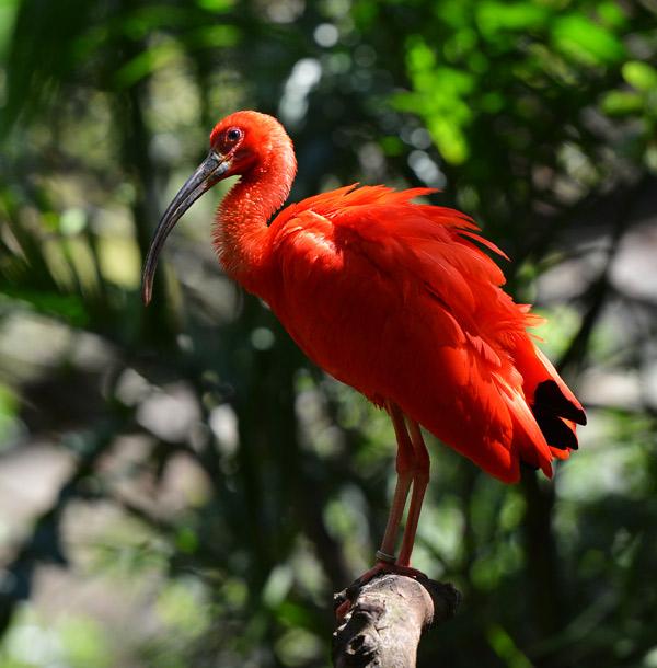 Парк Птиц. Игуасу. Бразилия. Bird Park. Iguacu. Brasil. 18