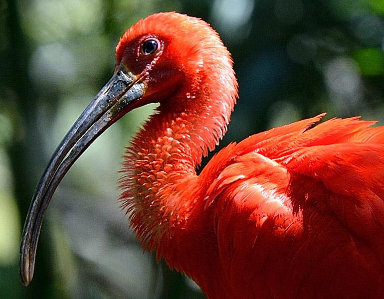 Фламинго. Парк Птиц. Игуасу. 3НШ