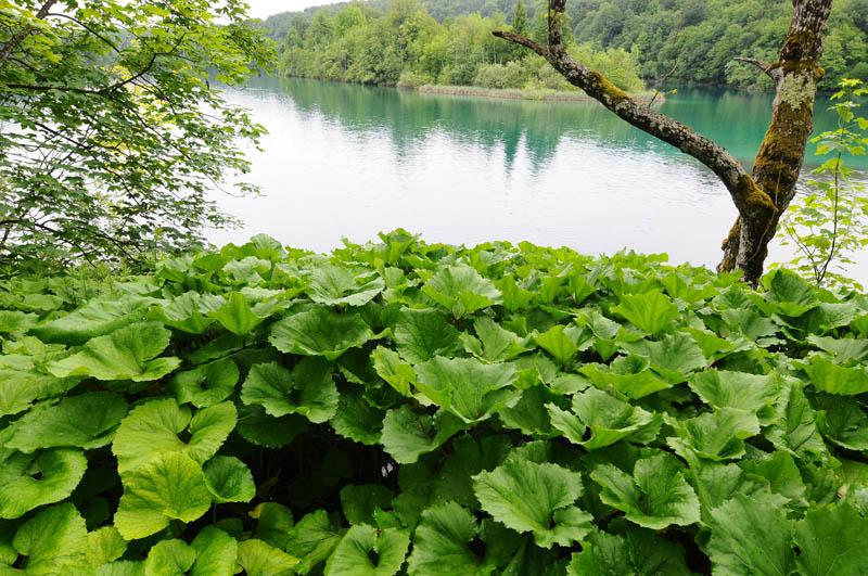 Хорватия Плитвицкие озёра. Croatia. Plitvice. 19.