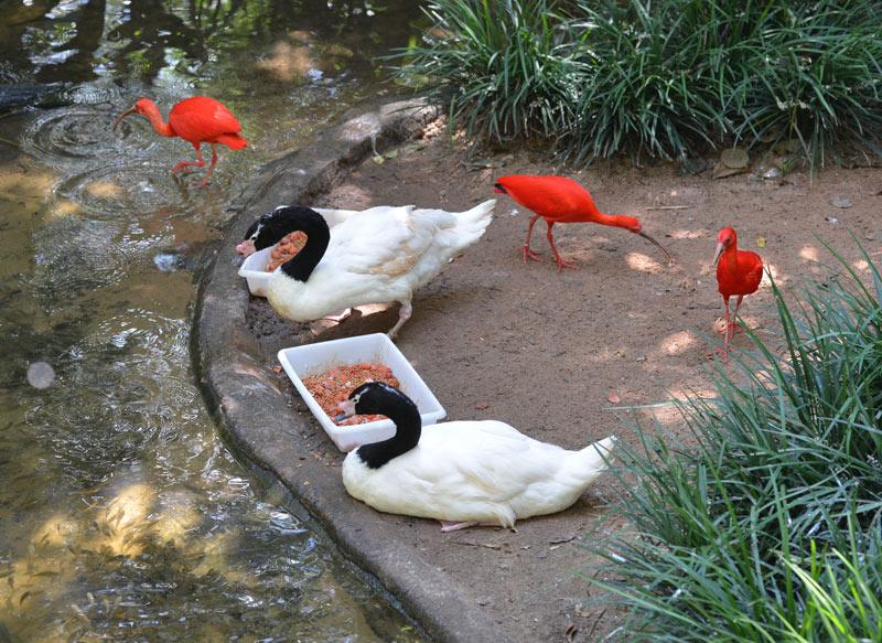 Парк Птиц. Игуасу. Бразилия. Bird Park. Iguacu. Brasil. 19