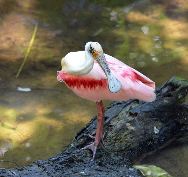 Парк Птиц. Игуасу. Бразилия. Bird Park. Iguacu. Brasil. 21