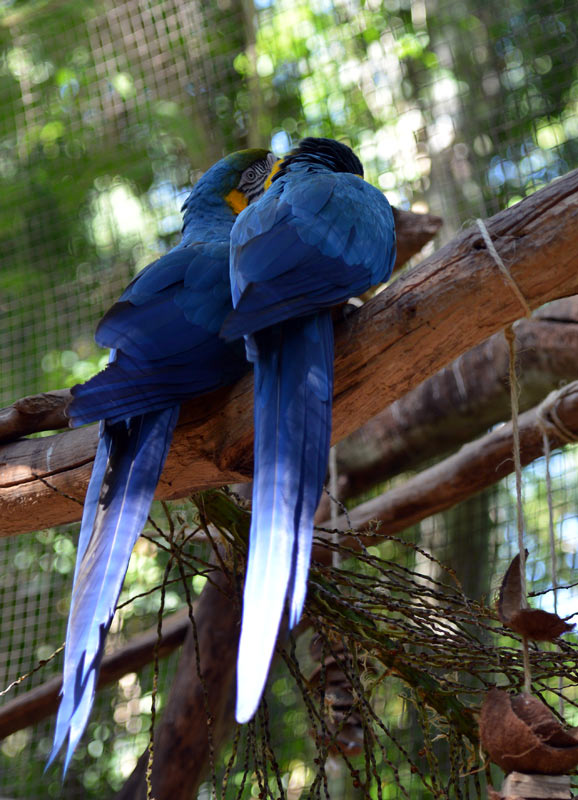Парк Птиц. Игуасу. Бразилия. Bird Park. Iguaсu. Brasil. 43