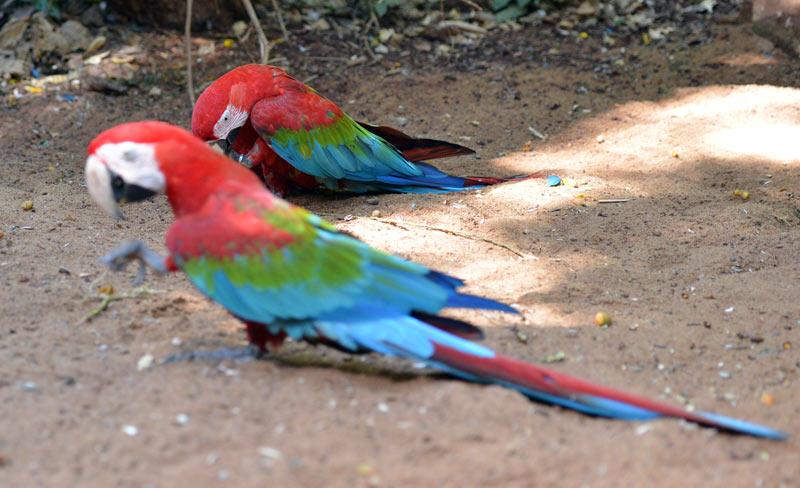 Парк Птиц. Игуасу. Бразилия. Bird Park. Iguaсu. Brasil. 45