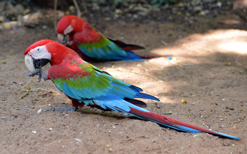 Парк Птиц. Игуасу. Бразилия. Bird Park. Iguaсu. Brasil. 44