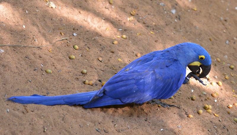 Парк Птиц. Игуасу. Бразилия. Bird Park. Iguaсu. Brasil. 49