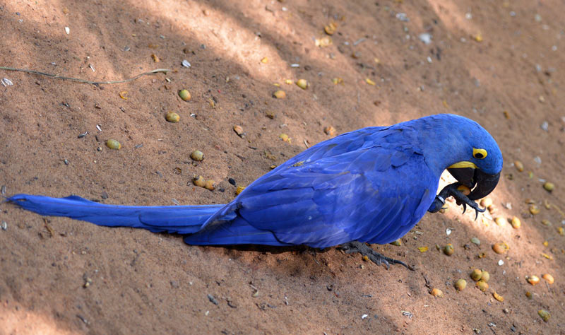 Парк Птиц. Игуасу. Бразилия. Bird Park. Iguaсu. Brasil. 47