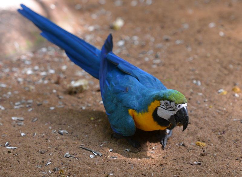 Парк Птиц. Игуасу. Бразилия. Bird Park. Iguaсu. Brasil. 48
