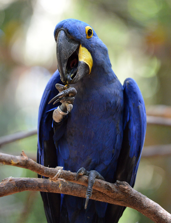 Парк Птиц. Игуасу. Бразилия. Bird Park. Iguaсu. Brasil. 52