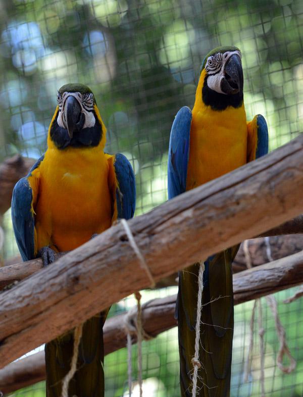 Парк Птиц. Игуасу. Бразилия. Bird Park. Iguaсu. Brasil.