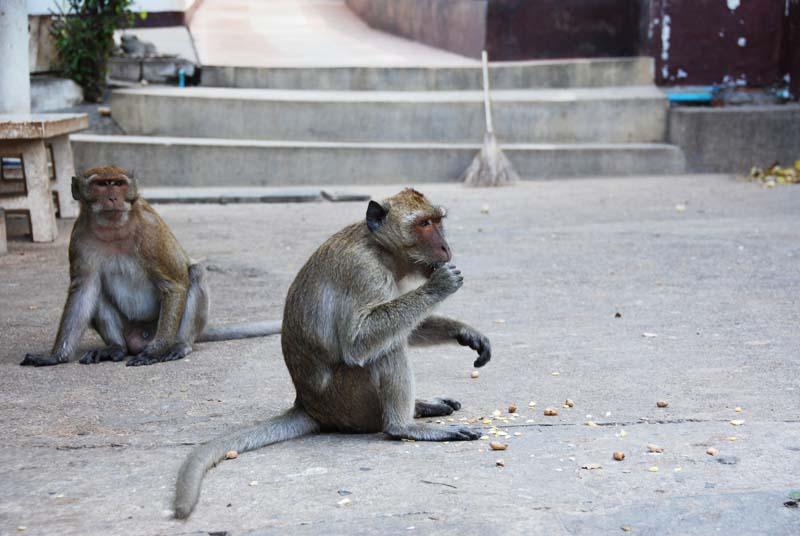 Хуа Хин. Обезьяны. Hua Hin. Monkeys. 13.