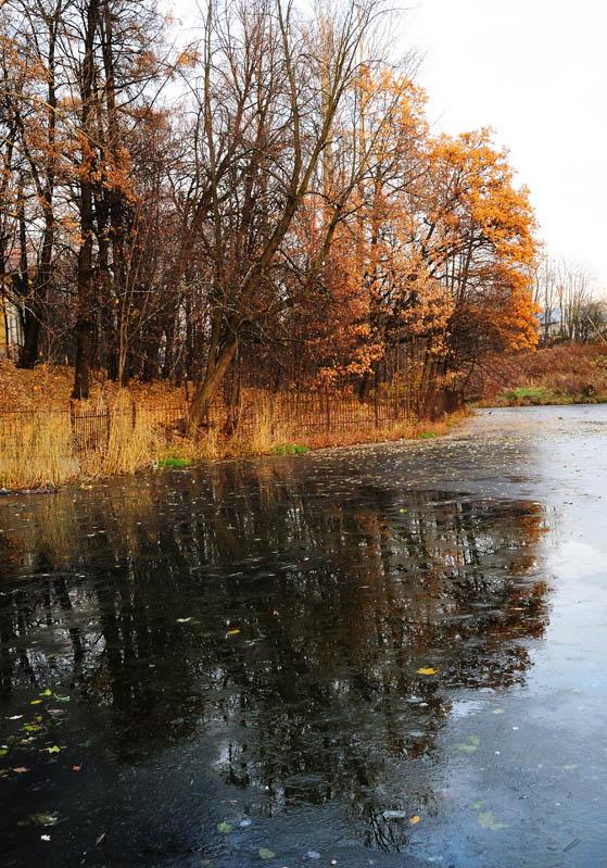 Питер. Осенний пруд. 2