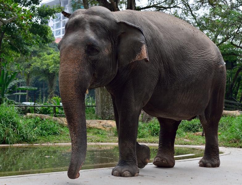 Зу Негара. Куала-Лумпур. Слон. 3