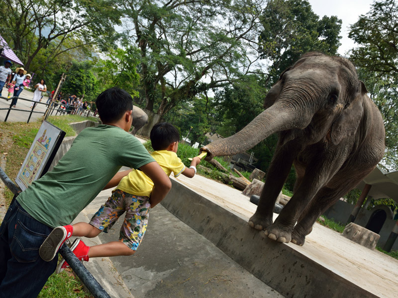 Зу Негара. Куала-Лумпур. Слон. 5