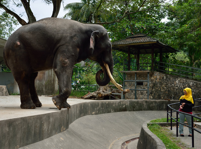 Зу Негара. Куала-Лумпур. Слон. 8