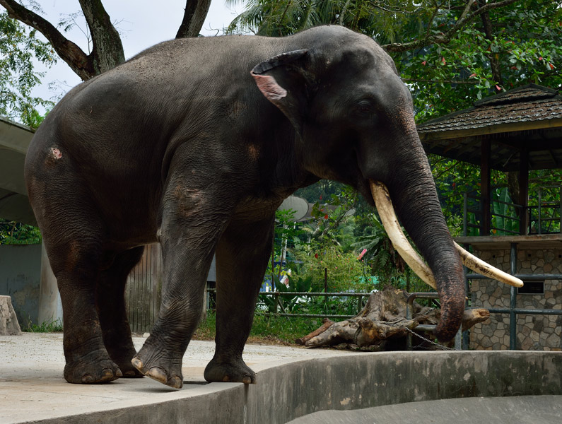 Зу Негара. Куала-Лумпур. Слон. 10