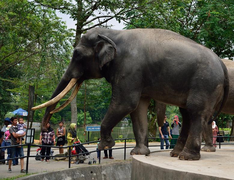 Зу Негара. Куала-Лумпур. Слон. 14