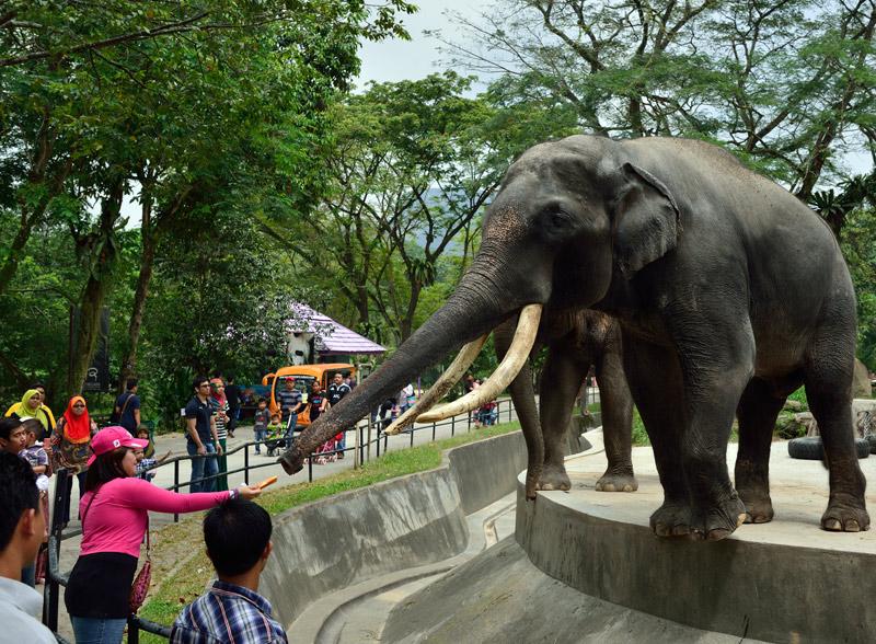 Зу Негара. Куала-Лумпур. Слон. 6