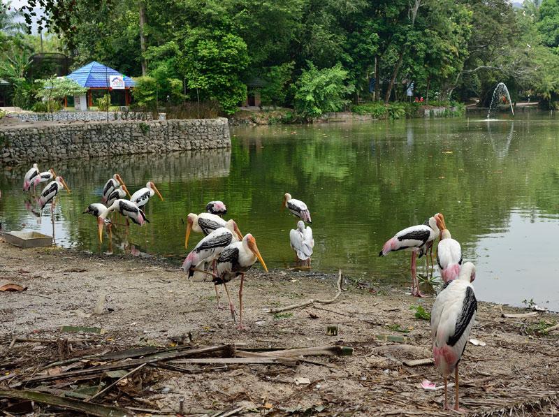 Зоопарк в Куала-Лумпуре. Фламинго. 14