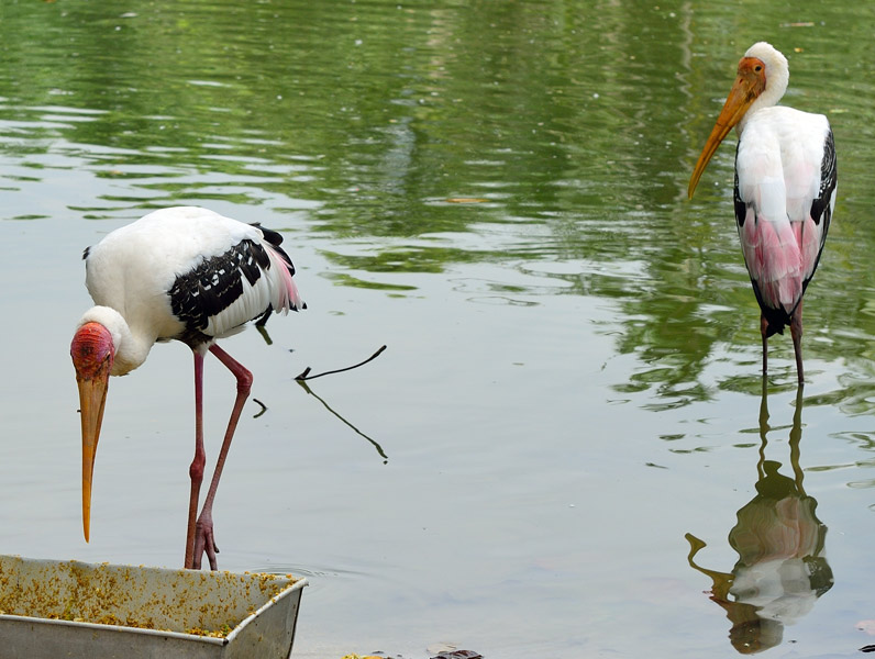 Зоопарк в Куала-Лумпуре. 15