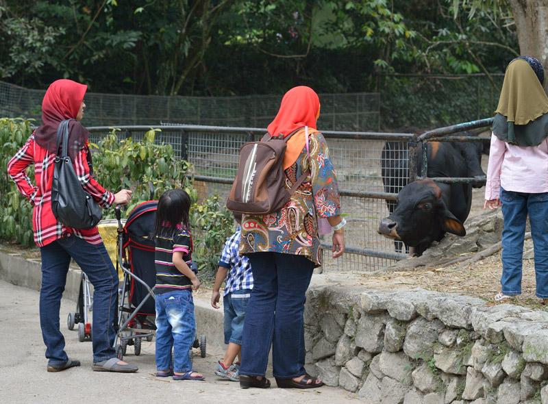 Зоопарк в Куала-Лумпуре. 57