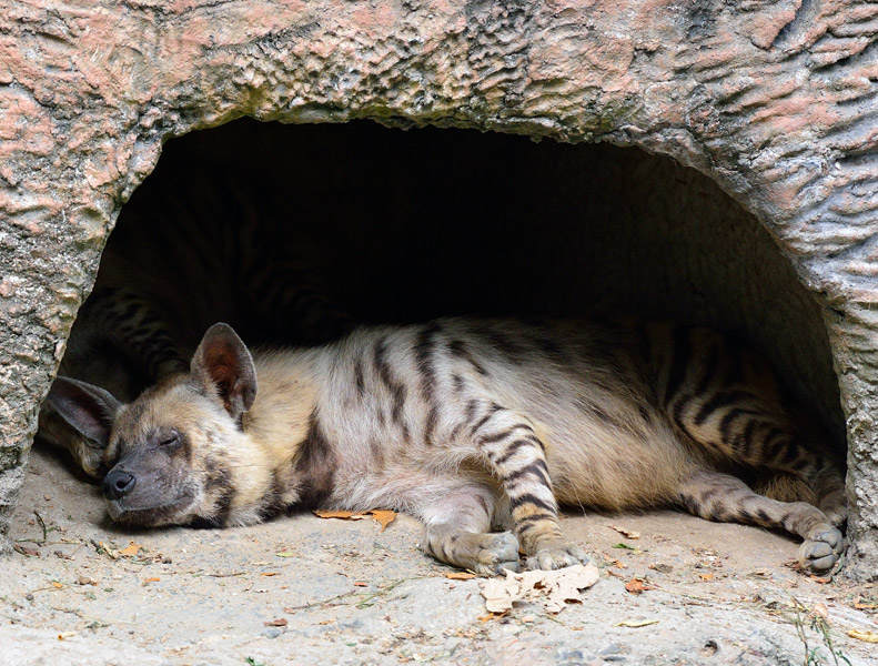 Зоопарк в Куала-Лумпуре. 58