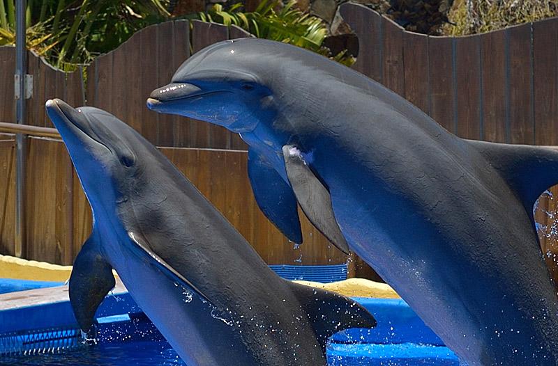 Дельфины. 100% кроп.