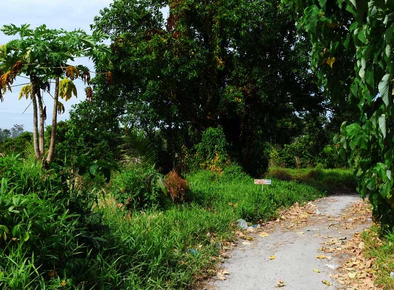 Ко Липе. Прогулка по острову. Ko Lipe. 193
