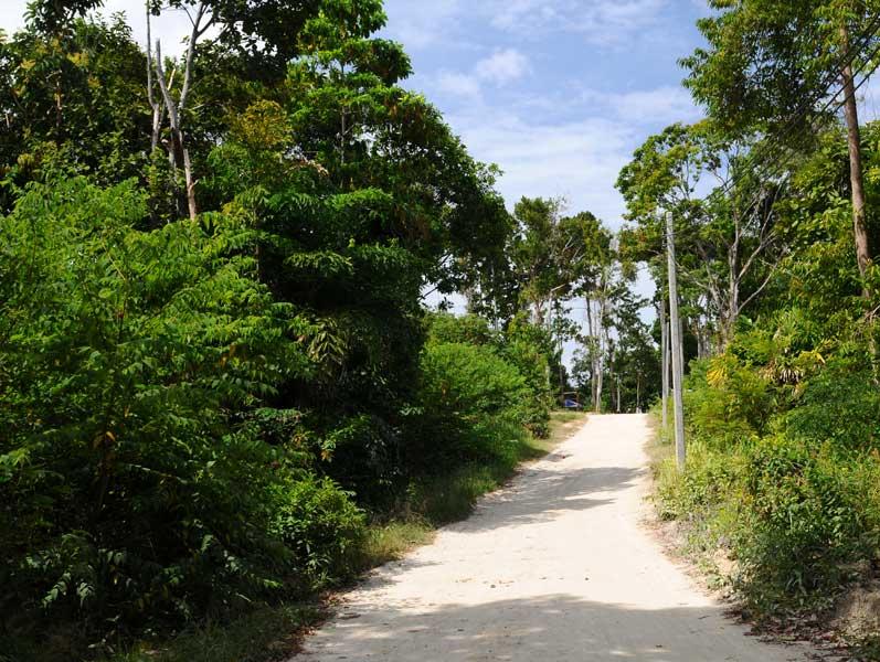 Ко Липе. Прогулка по острову. Ko Lipe. 224