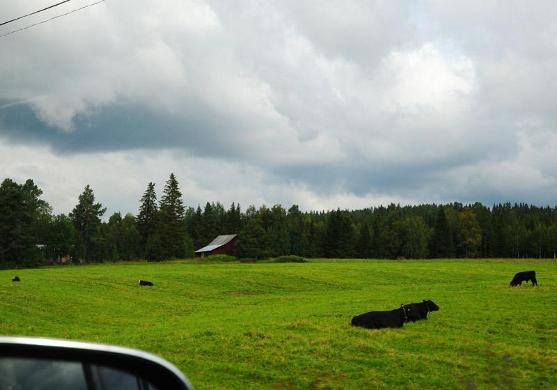 Остерсунд - Трондхейм. Е14. (c)Smyslik 16