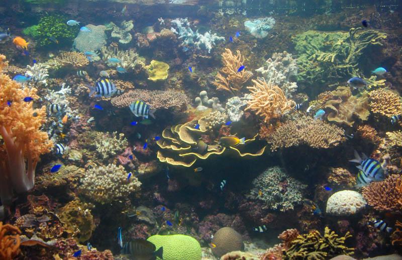 Фото Сингапур. Сентоза. Океанариум.