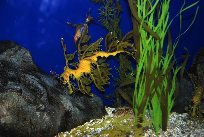 Фото Сингапур. Сентоза. Океанариум.Singapore. Underwater World.