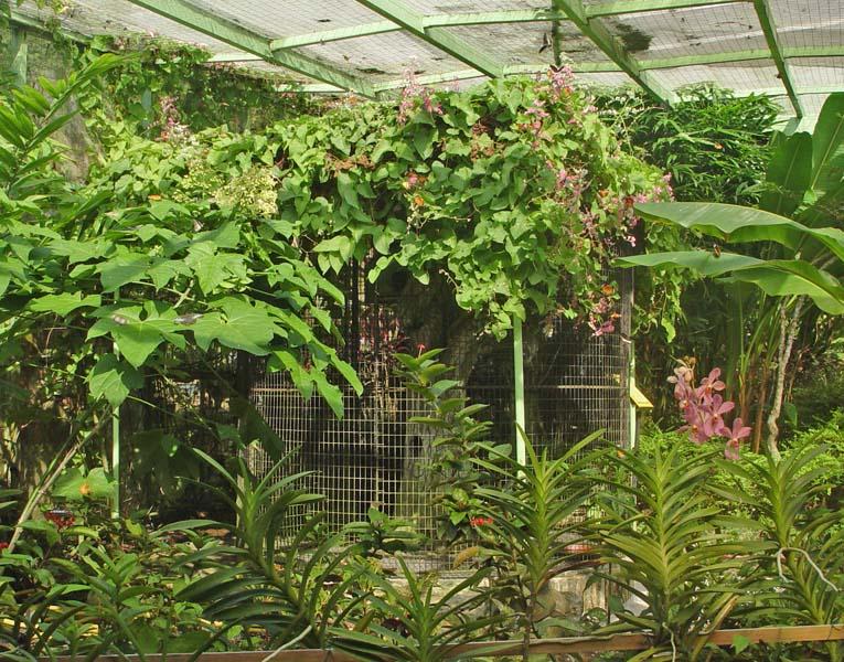 Пенанг.Ферма бабочек.Penang.Butterfly Farm.