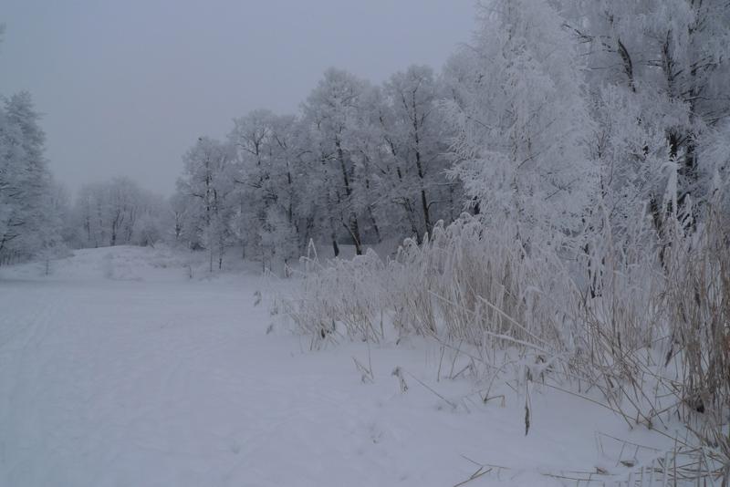 Зимний пруд. Джпег кам.