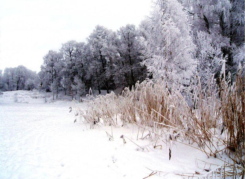 Зимний пруд. 1
